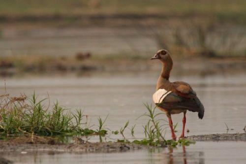 Quack. I mean honk. I mean quack.